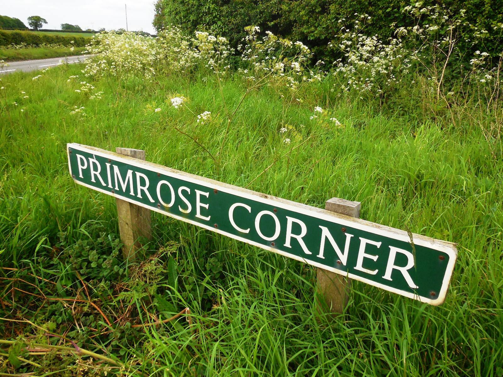 primrose corner 1